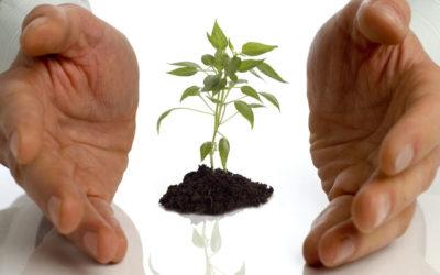 Малый бизнес и то, что ему мешает развиваться